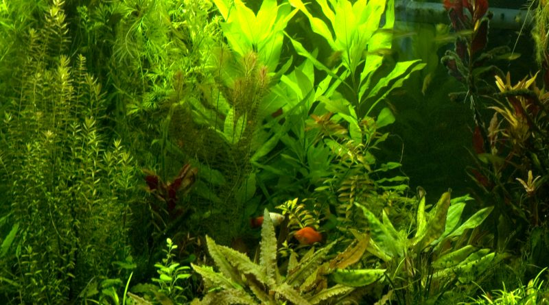How did my fish survive in a planted tank after a month without getting fed?